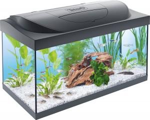 kampffisch aquarium online kaufen komplett
