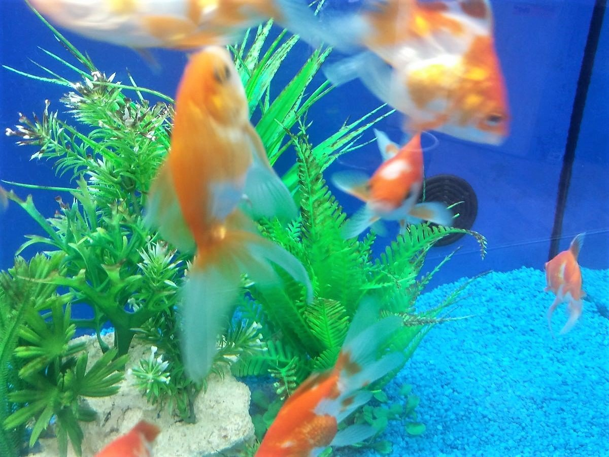 kleines aquarium kaufen