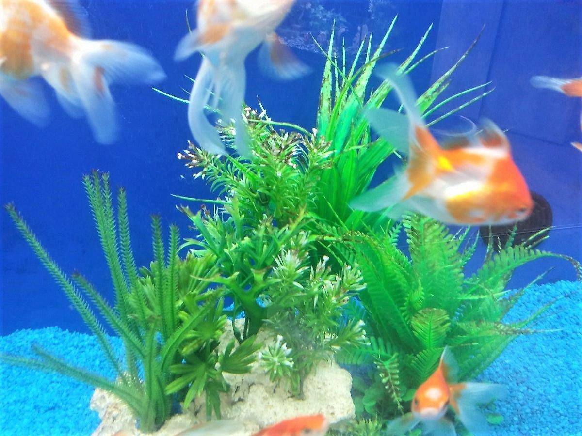 Aquarium Fische Fur Anfanger Welche Arten Sie Als Einsteiger
