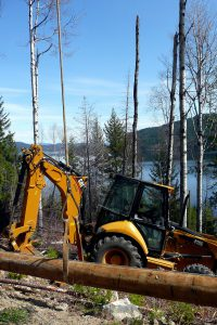 Traktor im Wald beim Holz fällen